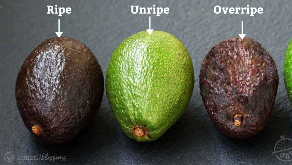 Three avocados, one perfectly ripe, one unripe and the other overripe.